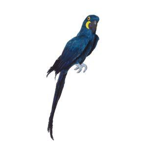 Macaw Bird Prop