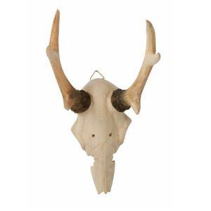 Skull Head Prop Hire Tasmania
